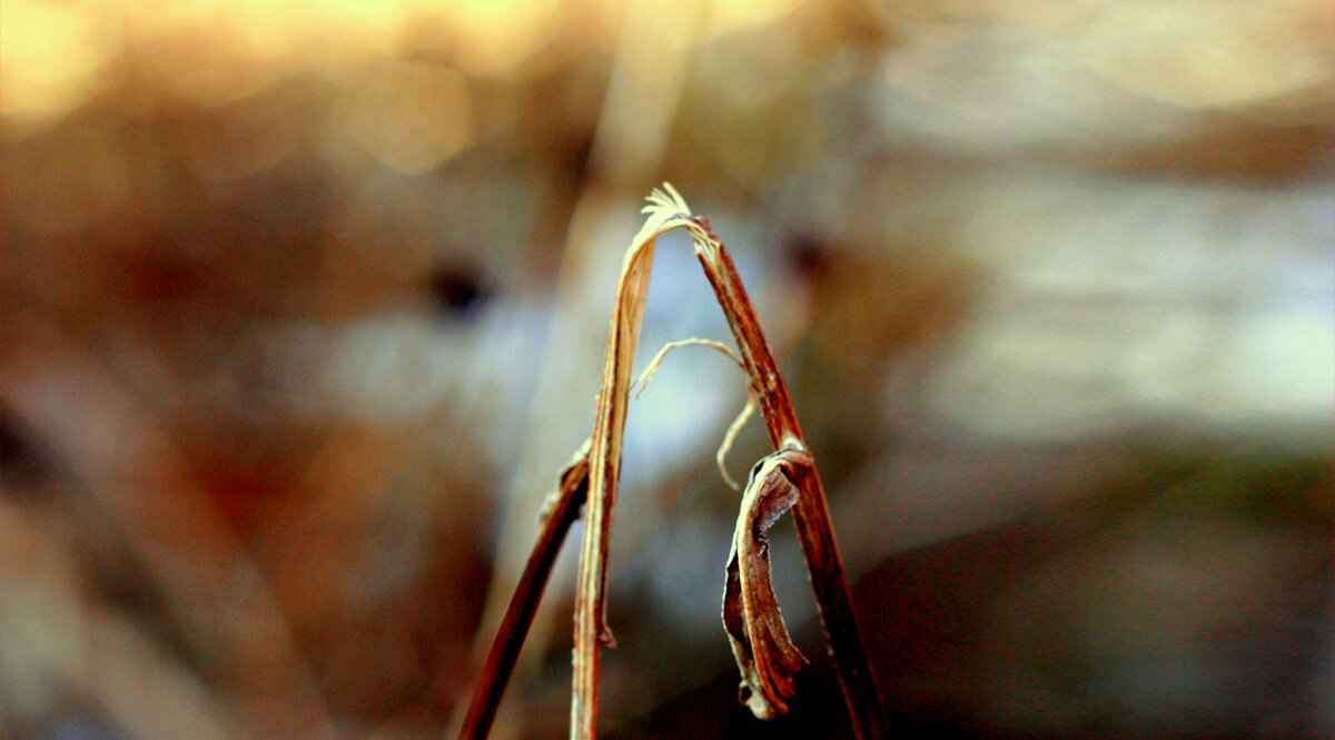 A Bruised Reed