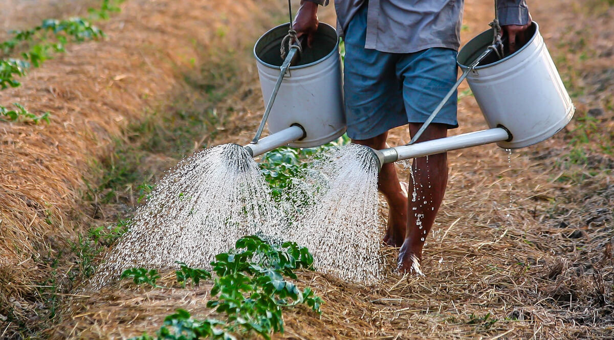 Man Using Watering Cans in Vietnam