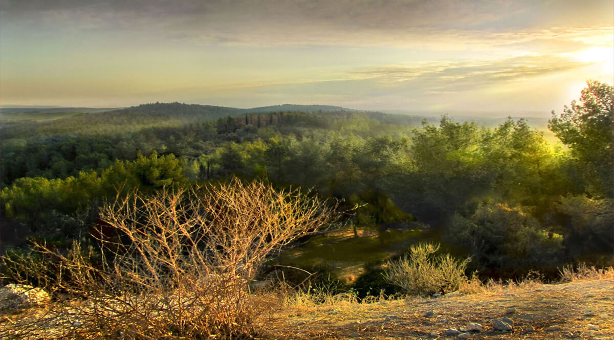 The Jerusalem Hills, Sunset