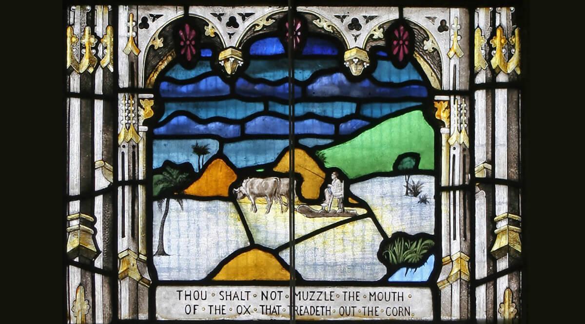 Thou Shalt Not Muzzle the Ox - Saint Mary's Church, Swaffham Prior